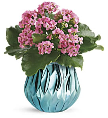 Blooming Gem Kolanchoe